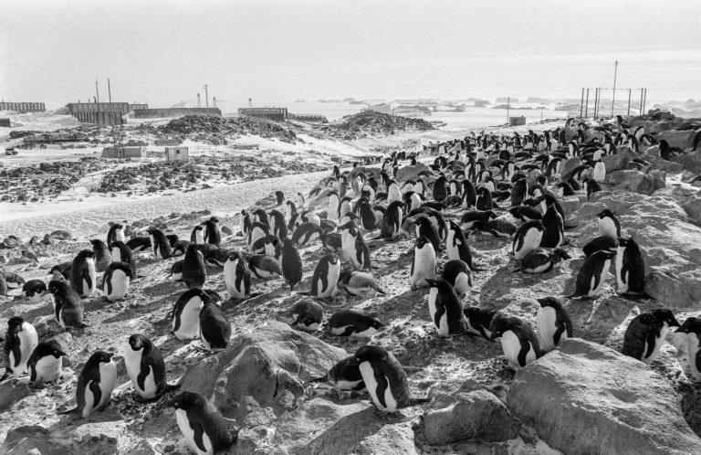 Au loin, la base scientifique Dumont d'Urville. Fixée au rocher de l'île des Pétrels, à quelques centaines de mètres des falaises de glace du continent antarctique, ce gros promontoire rocheux, comme les îlots avoisinants, se peuple chaque été d'une multitude de manchots adélie qui nichent jusque sous les bâtiments de la base.